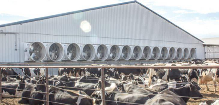 Çiftlik Havalandırma Sistemleri
